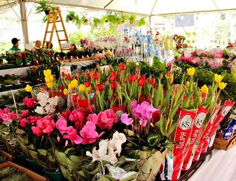 Pátio do Carmo recebe Festival de Flores a partir desta quinta